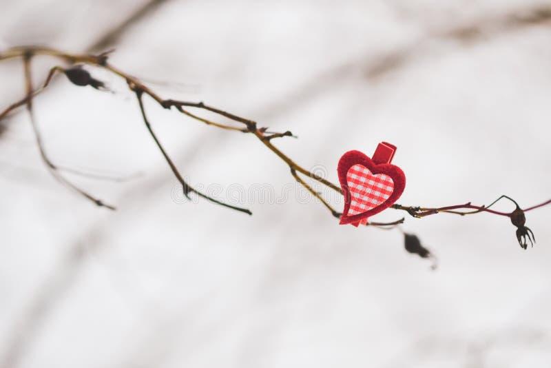 Piękny serce na gałąź na Naturalnych tło pojęciu walentynka dzień zdjęcia royalty free