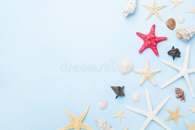 Piękny skład od seashells i rozgwiazdy Wakacji letnich, podróży i wycieczki tło, Odgórny widok zdjęcie stock