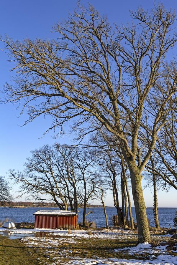 Piękny skerry wybrzeże przy morzem bałtyckim zdjęcie royalty free