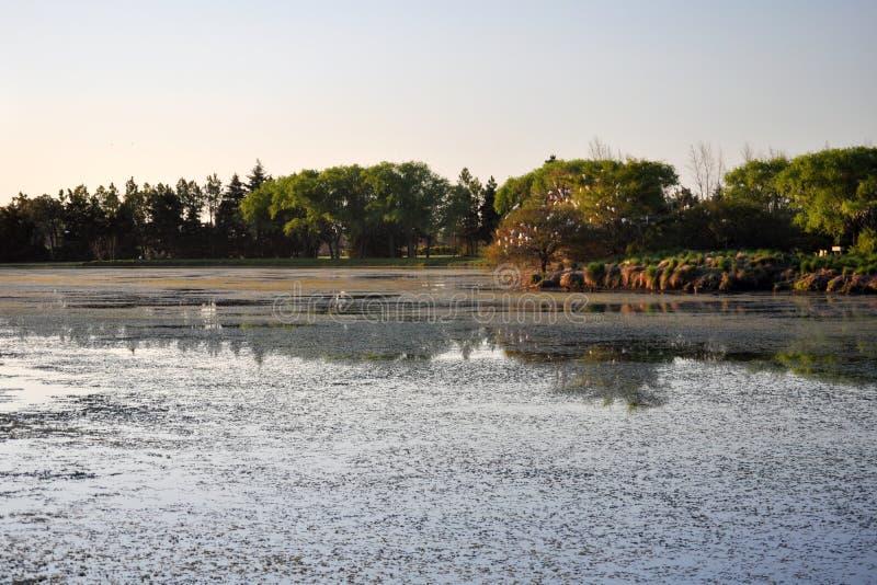 Piękny spokojny jezioro zdjęcie royalty free