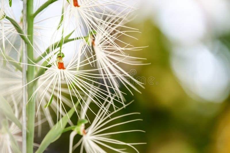 Piękny storczykowy kwiatu i zieleni liści tło w Garde obrazy royalty free