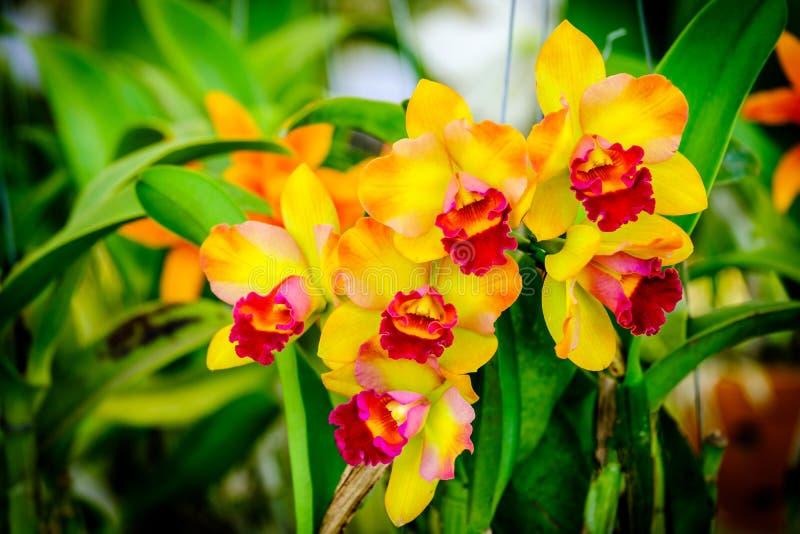 Piękny storczykowy kwiatu i zieleni liści tło w Garde fotografia stock