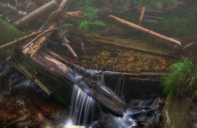 Piękny strumyk z siklawą przy wiosny światłem dziennym zdjęcie royalty free