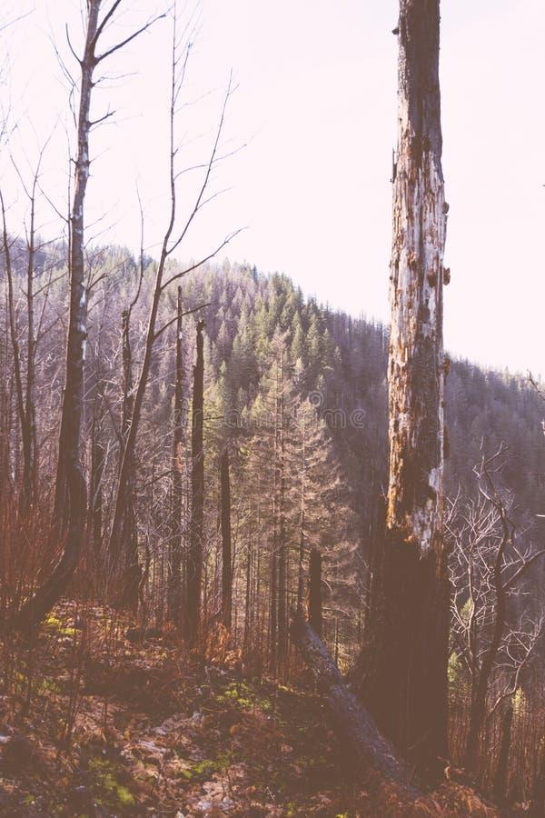 PiÄ™kny strzaÅ' drzewa na wzgórzu zdjęcie stock