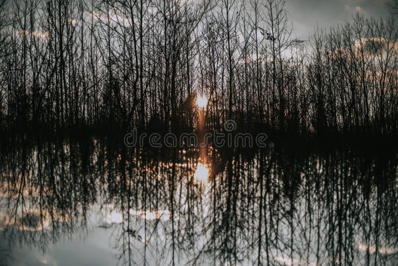 Piękny strzał gęsty las z odbiciem w wody i światła słonecznego jaśnieniu zdjęcie stock