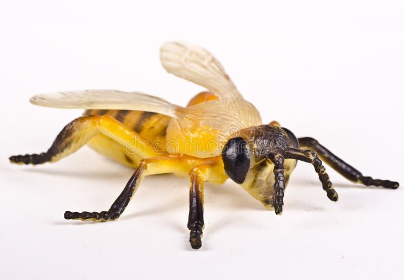 Piękny strzał klingeryt mamrocze pszczoły obraz stock