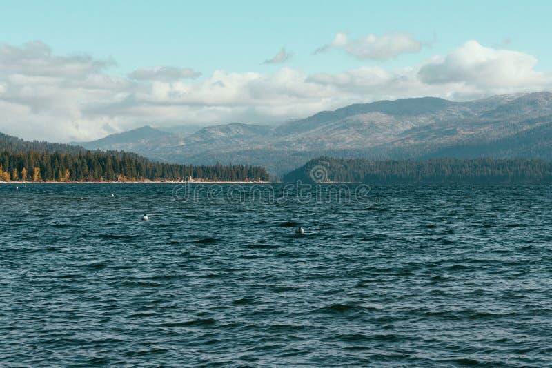 Piękny strzał morze z chmurami w jasnym niebieskim niebie i lesie na horyzoncie zdjęcia royalty free