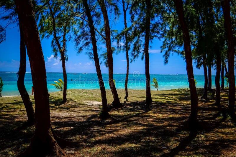 Piękny strzał wysocy drzewa na brzeg blisko plaży z niebieskim niebem w tle zdjęcia royalty free