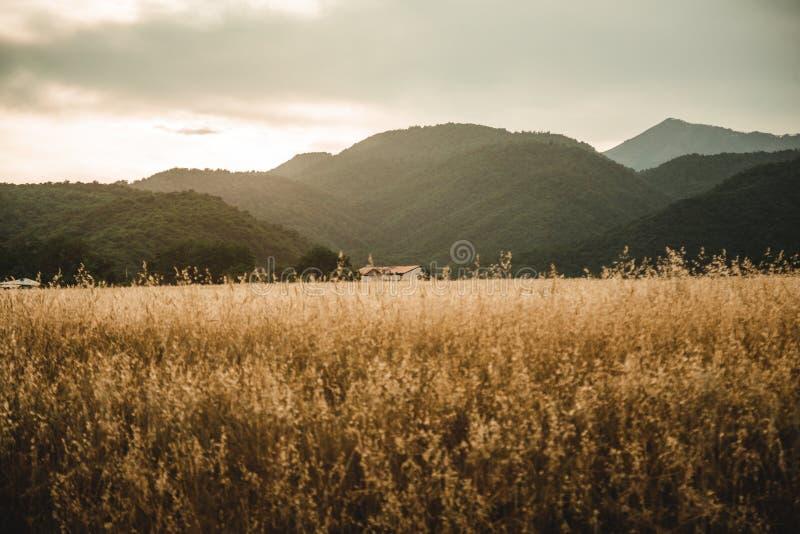 Piękny strzał złoty pszeniczny pole z domem w odległości troszkę zdjęcia royalty free