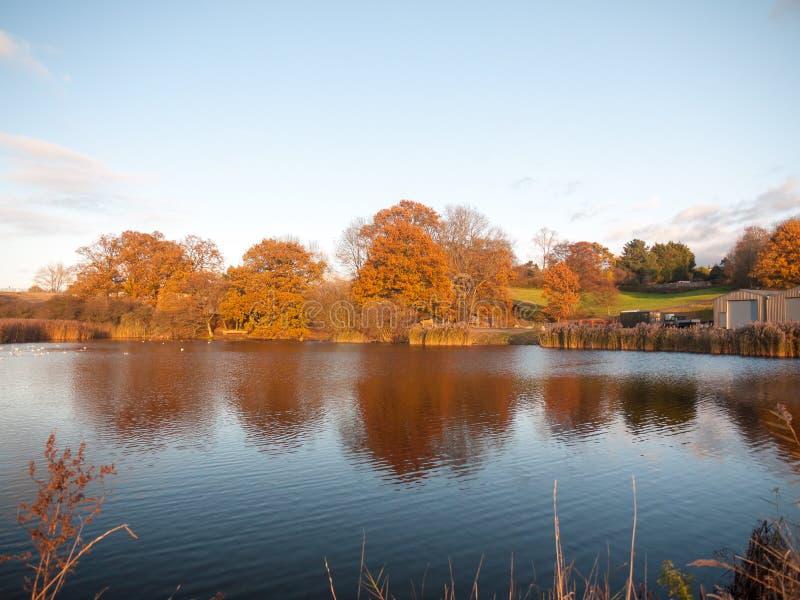 Piękny stunning jesieni drzew brzeg jeziora rozjarzony złoty landscap fotografia royalty free
