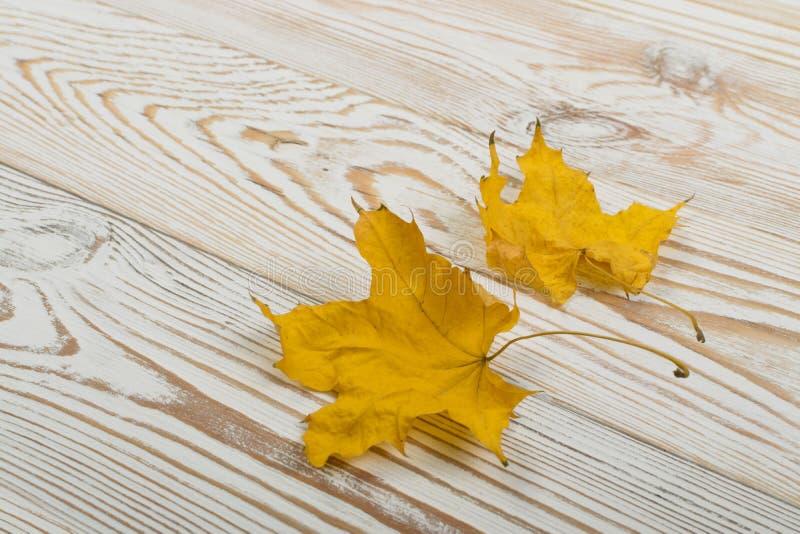 Piękny Suchy liść klonowy na Białym Drewnianym tle obrazy royalty free