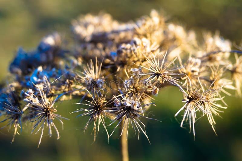 Piękny suszy kwiat abstrakcję makro- zdjęcia stock
