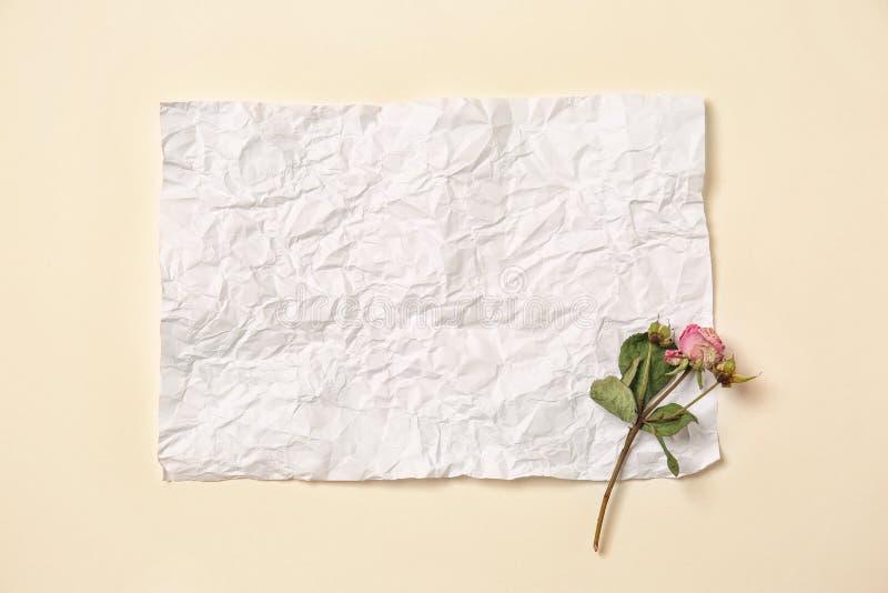 Piękny suszy różanego z prześcieradłem papier na białym tle zdjęcie royalty free