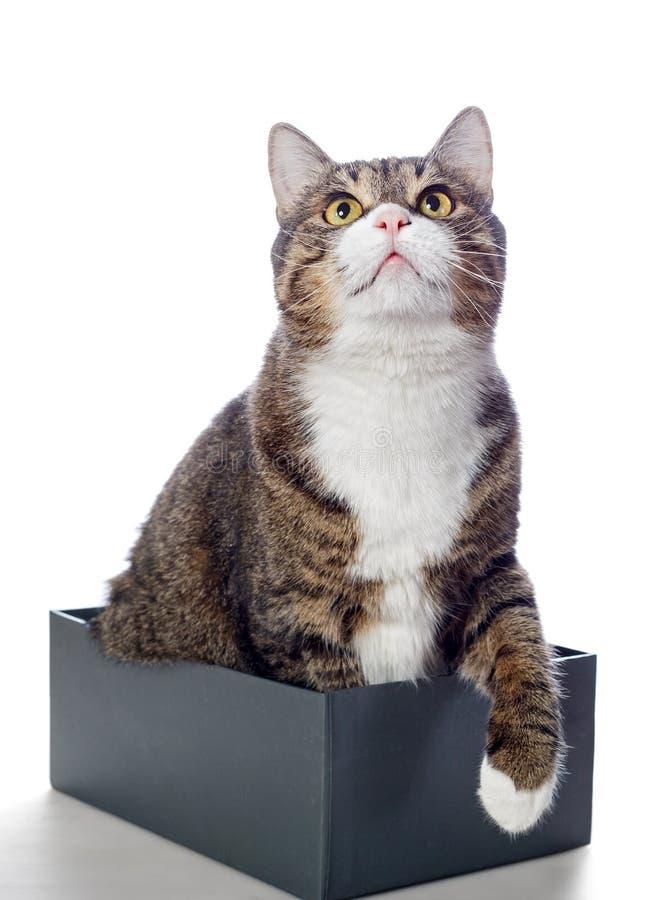 Piękny szary kota lying on the beach w pudełku obraz royalty free