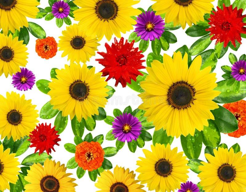 piękny tło kwiat fotografia stock