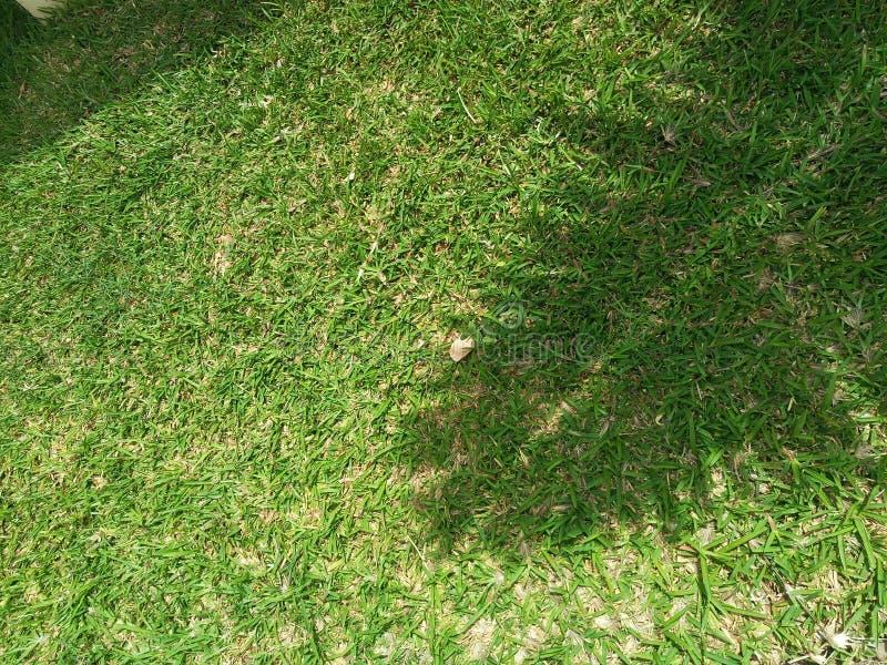 Piękny trawa widok zdjęcie stock