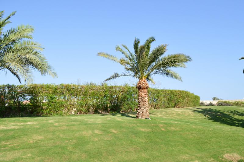 Piękny tropikalny gorący kurort z wysokimi palmami z liśćmi, egzotycznymi roślinami, drzewami i zieloną trawą przeciw niebieskiem fotografia royalty free
