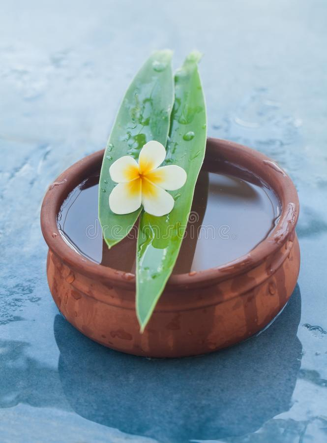 Piękny tropikalny kwiat na dwa długiej zieleni liściach obrazy royalty free