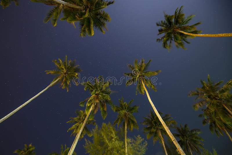 Piękny tropikalny nocne niebo z kokosowymi drzewkami palmowymi i gwiazdami, Tajlandia fotografia stock