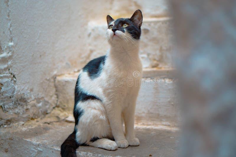 Piękny w połowie zbliżenie strzelał domowa śliczna kot pozycja blisko schody i przyglądający w górę obrazy royalty free