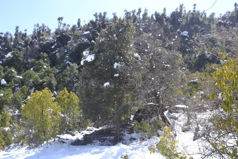 Piękny widok śnieg zakrywał wzgórza i sosny zdjęcie stock