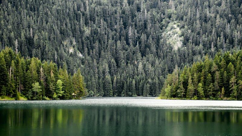 Piękny widok Czarny las w Durmitor parku i jezioro Montenegro zdjęcie royalty free