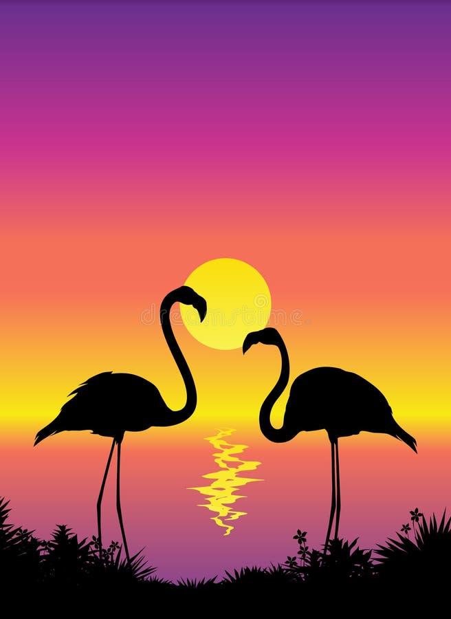 piękny widok flaminga ilustracji