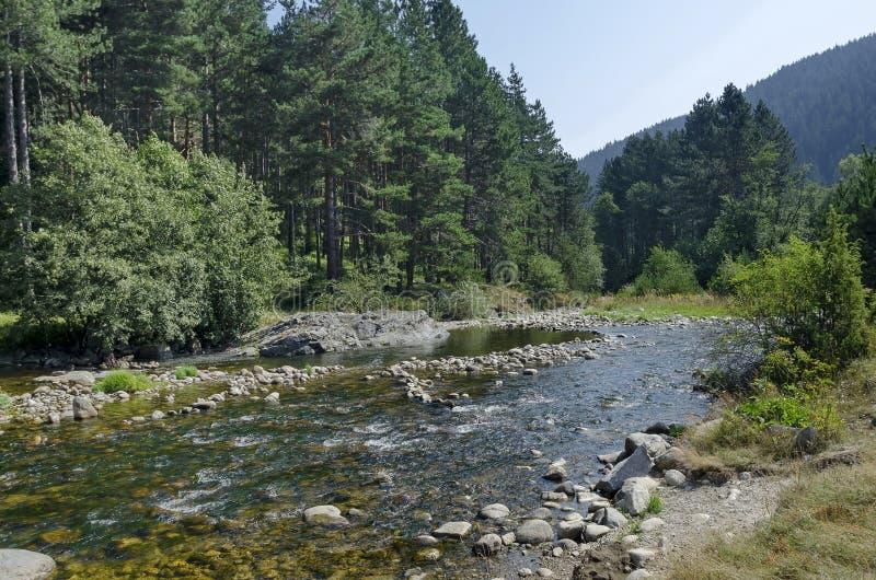 Piękny widok jesienny las Iskar w Rila górze i rzeka obraz stock