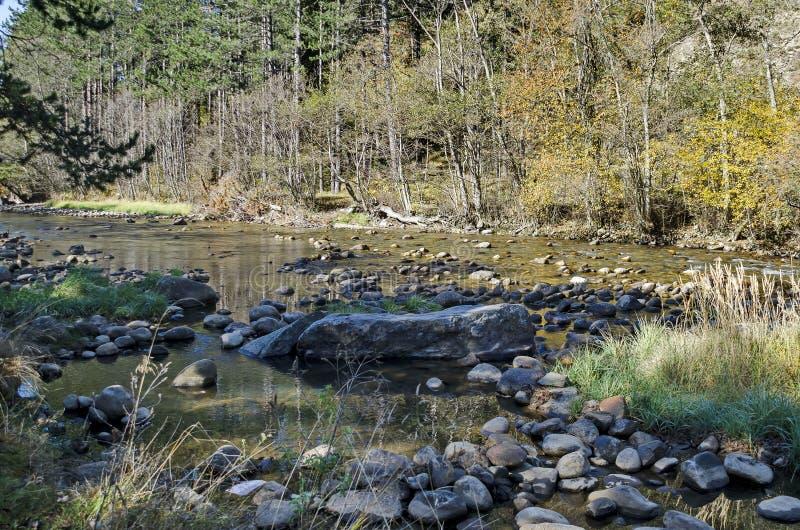 Piękny widok jesienny las Iskar w Rila górze i rzeka zdjęcie stock