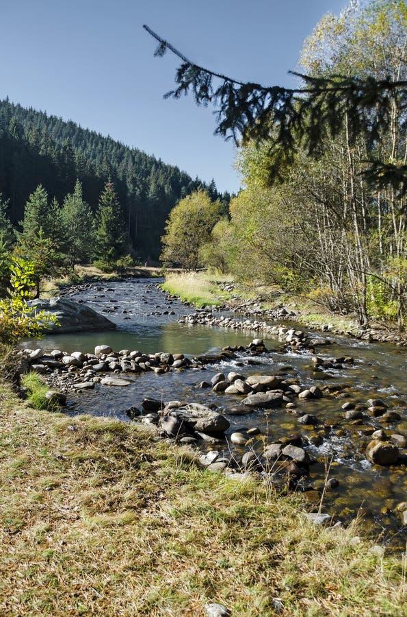 Piękny widok jesienny las Iskar w Rila górze i rzeka fotografia royalty free