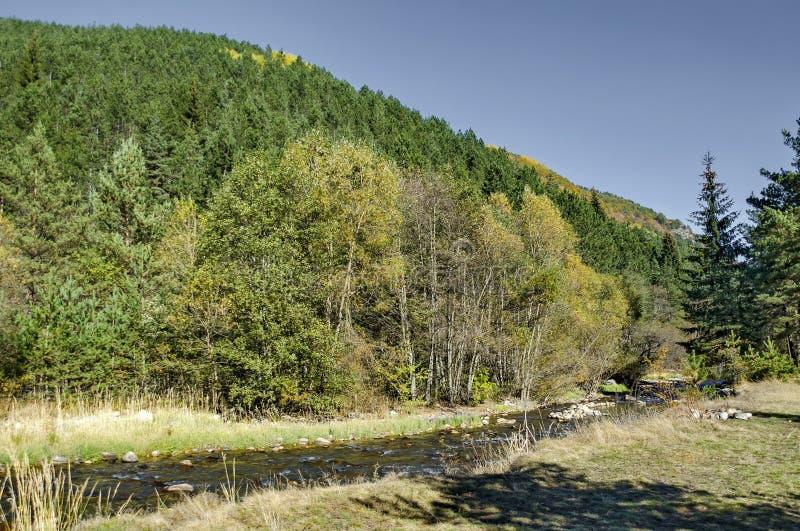 Piękny widok jesienny las Iskar w Rila górze i rzeka obrazy stock