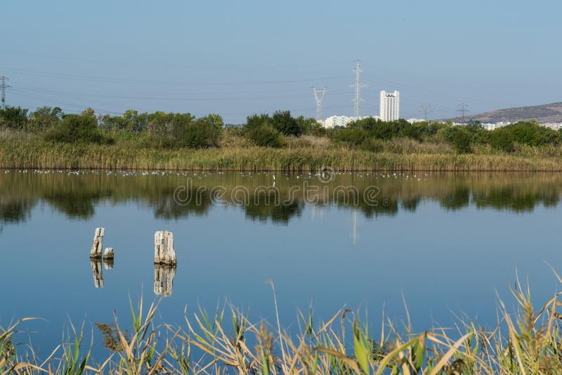 Piękny widok jezioro w natury konserwaci centrum zdjęcie stock