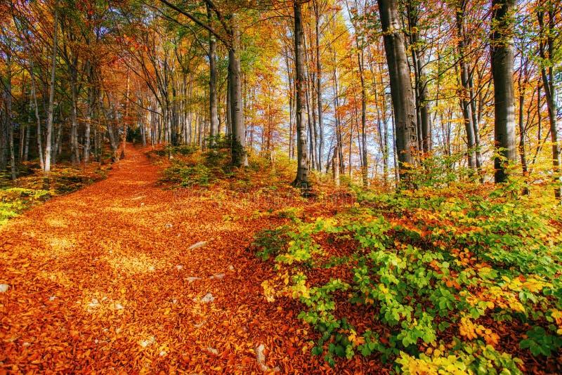 Piękny widok las na słonecznym dniu fotografia stock