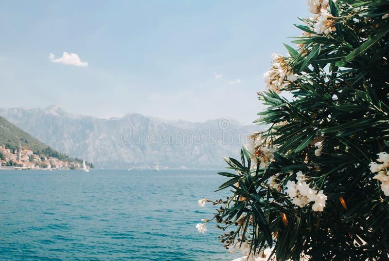 Piękny widok na Kotor zatoce od wyspy fotografia stock