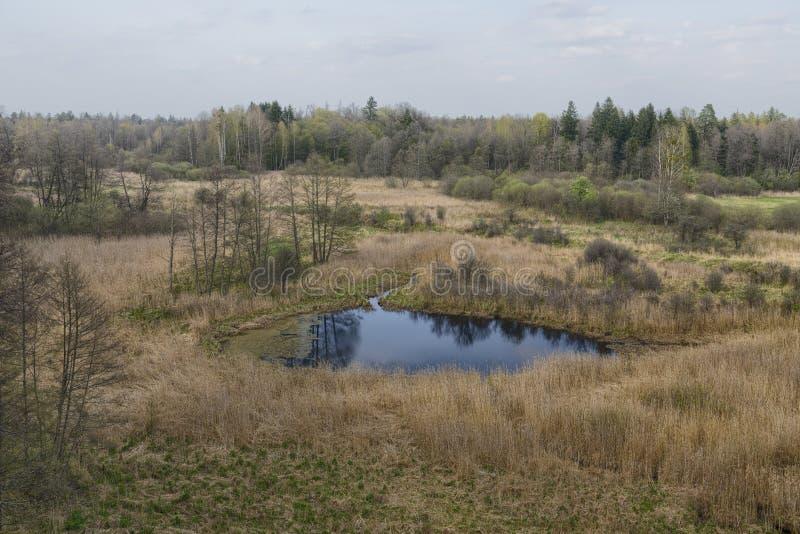 Piękny widok na pierwotny las Białowieski, Polska zdjęcia stock