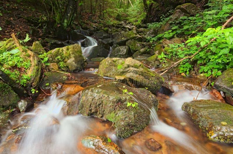 Piękny widok siklawa krajobraz Mała siklawa w głębokim - zielony lasowy Zakarpattya, Ukraina zdjęcie royalty free