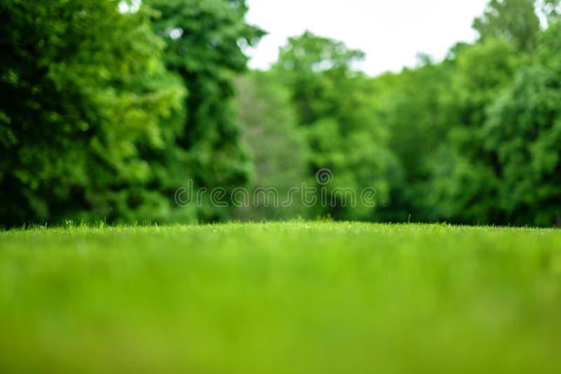 Piękny widok skoszony gazon w tle park z drzewami obraz royalty free