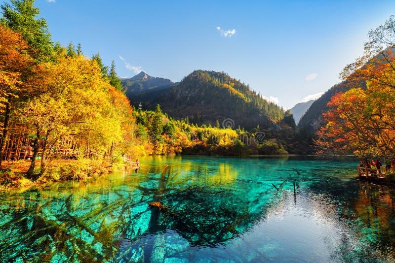 Piękny widok zanurzający drzewni bagażniki w Pięć Kwiat jeziorze obrazy royalty free