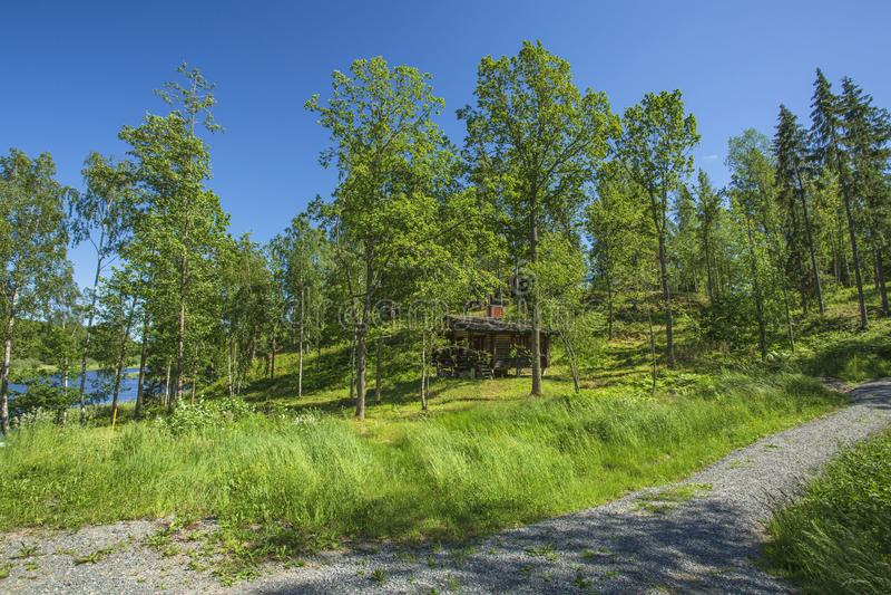 Piękny widok zbocze z zielonymi drzewami i roślinami na niebieskiego nieba tle obraz royalty free