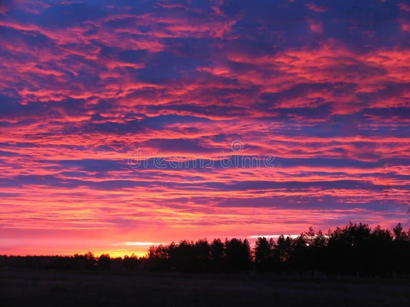 Piękny wieczór krajobraz nad lasem fotografia royalty free