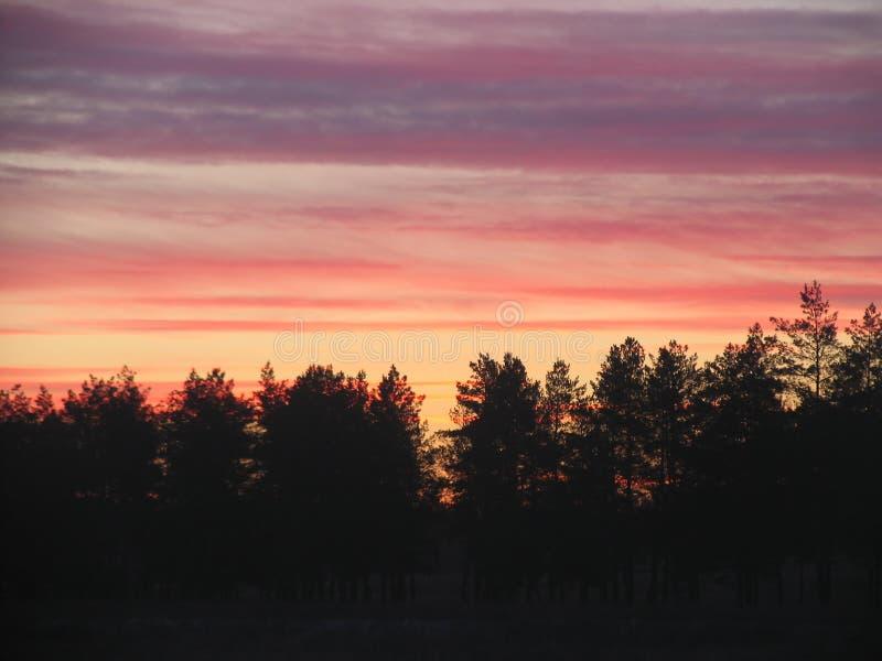 Piękny wieczór krajobraz nad lasem obrazy royalty free