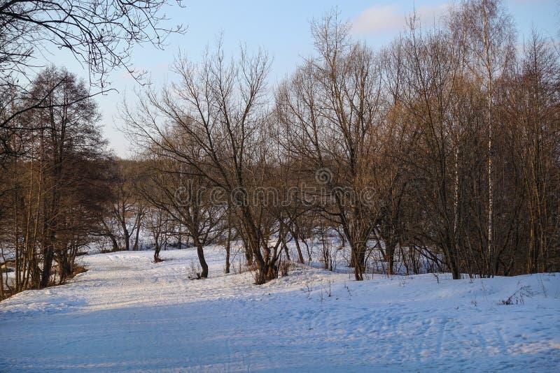Piękny wiejski krajobraz wczesna wiosna Drzewa zaświecają słońcem śnieg błękitne niebo Rosja maszerujący obraz royalty free