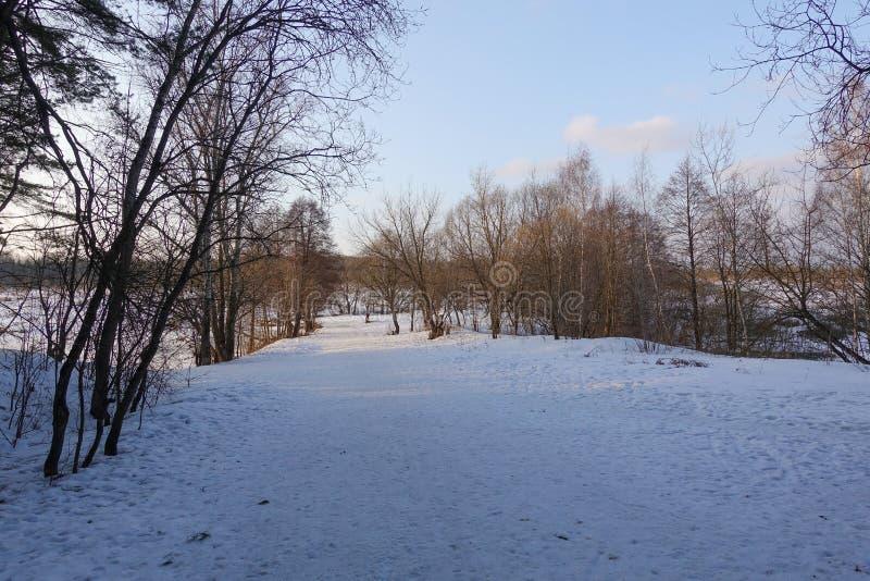 Piękny wiejski krajobraz wczesna wiosna Drzewa zaświecają słońcem śnieg błękitne niebo Rosja maszerujący fotografia stock