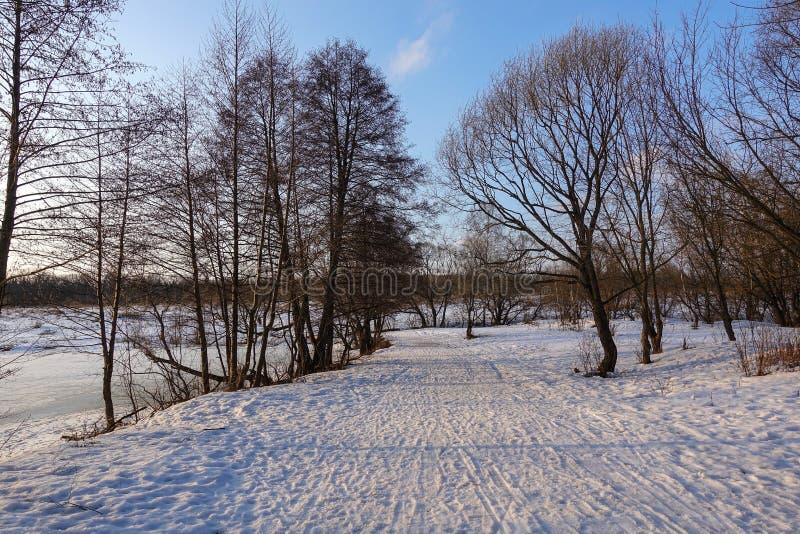 Piękny wiejski krajobraz wczesna wiosna Drzewa zaświecają słońcem śnieg błękitne niebo Rosja maszerujący fotografia royalty free