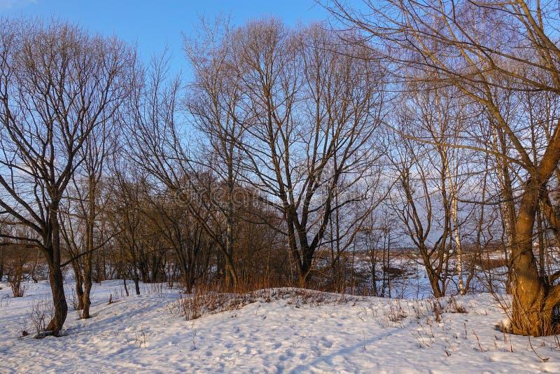Piękny wiejski krajobraz wczesna wiosna Drzewa zaświecają słońcem śnieg błękitne niebo Rosja maszerujący obrazy royalty free