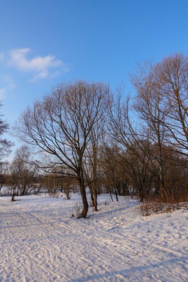 Piękny wiejski krajobraz wczesna wiosna Drzewa zaświecają słońcem śnieg błękitne niebo Rosja maszerujący zdjęcia royalty free