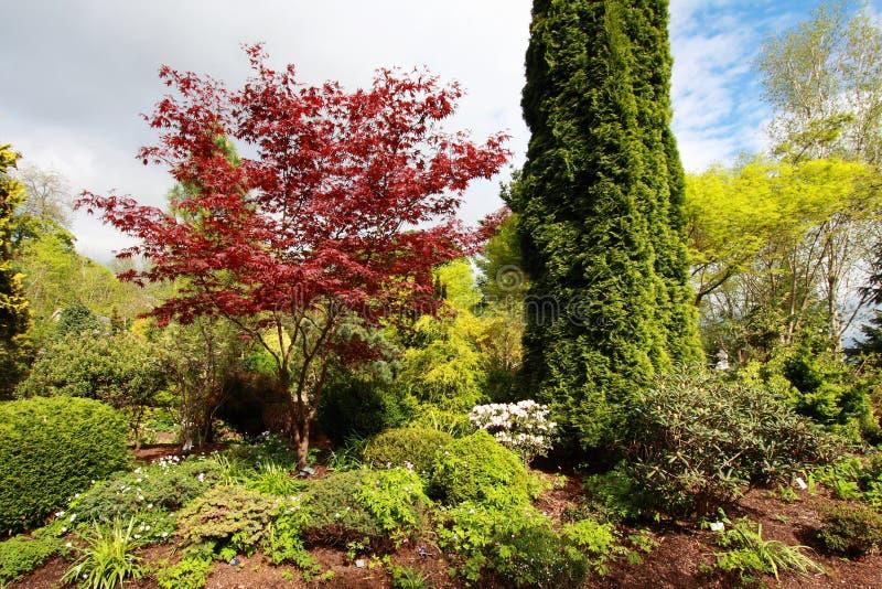 Piękny wiosna ogród obraz stock