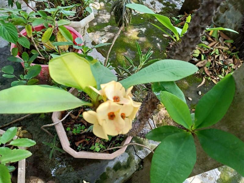 Piękny wizerunek żółty colour kwiat zdjęcia royalty free
