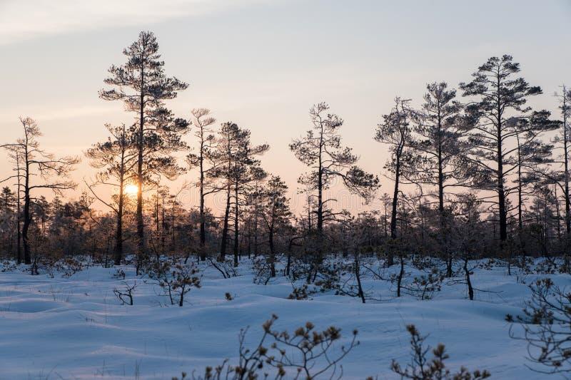 Piękny wschód słońca w zimie zdjęcie royalty free
