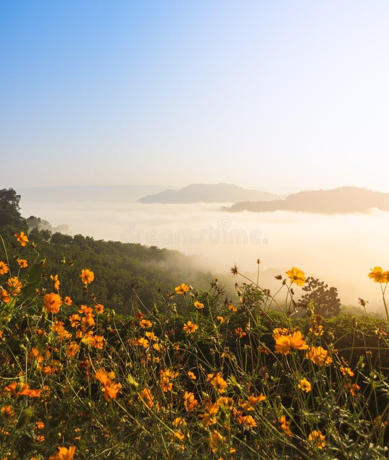 Piękny wschód słońca z morzem mgła nad Mekong rzeką z dzikim Meksykańskiego słonecznika przedpolem w Tajlandia fotografia royalty free